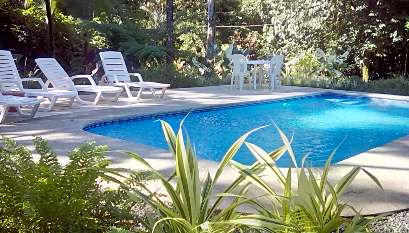 loco-natural-pool